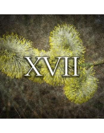 profumo Raptus XVII